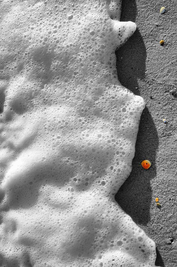 Seashells Photograph - Orange Shells by Emily Stauring