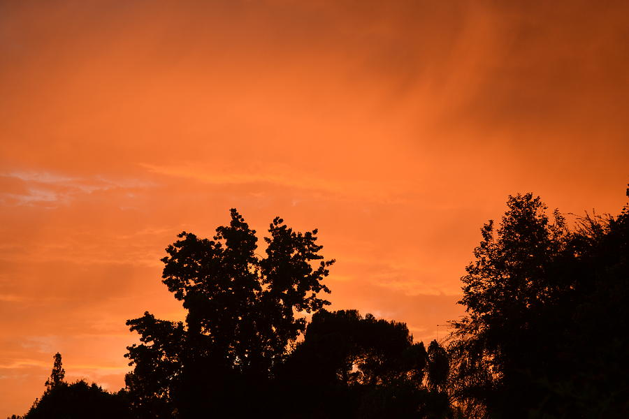 Orange Photograph - Orange Sky by Naomi Berhane