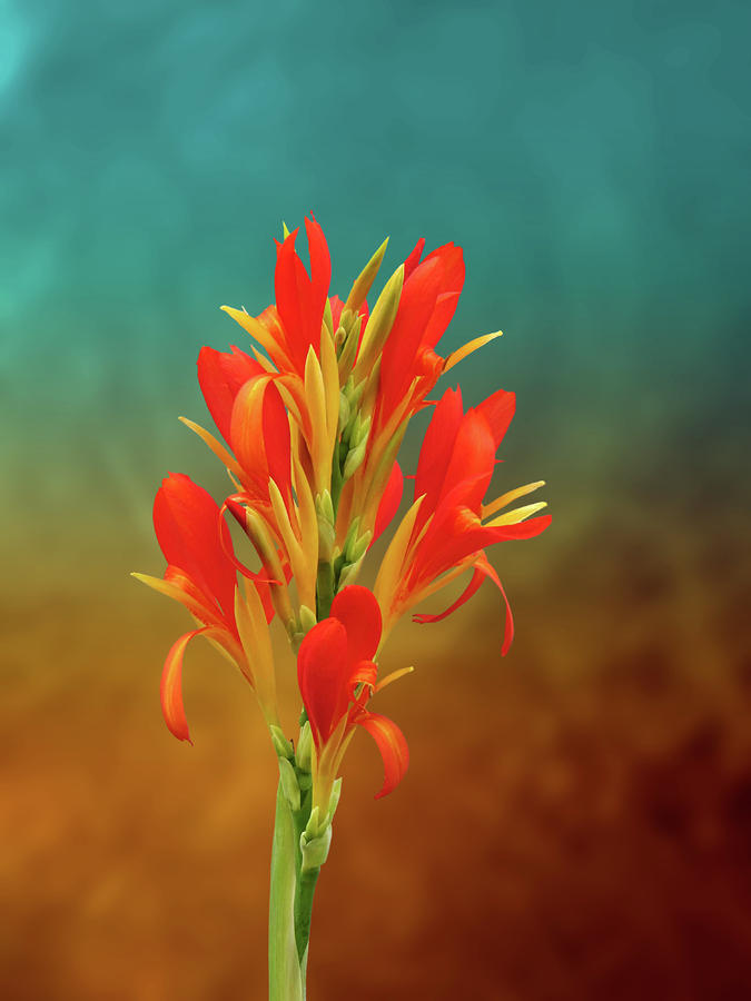 Flowers Photograph - Orange Spray Of Flowers On Golden Blue by Michael Taggart II