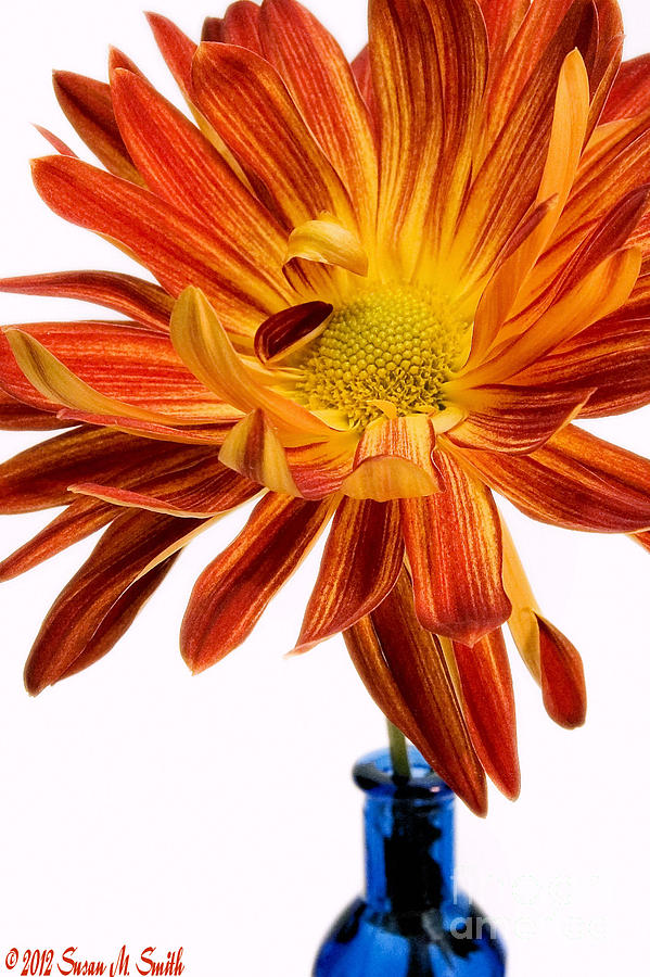 Flowers Photograph - Orange You Happy by Susan Smith