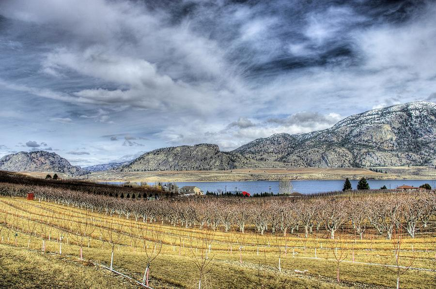 Vineyard Photograph - Orchards And Vineyards by John  Greaves