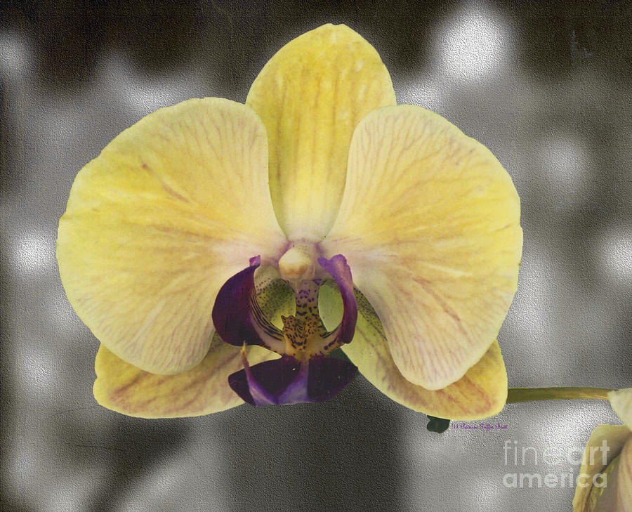 Orchid Study III by Patricia Griffin Brett