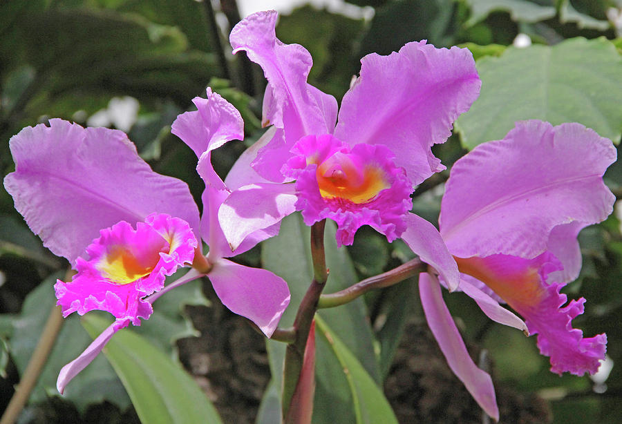 Becky Photograph - Orchids 14 by Becky Lodes