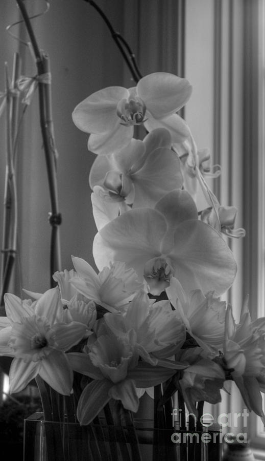 Orchids Photograph - Orchids 2 by David Bearden