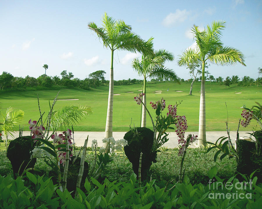 Orchid Photograph - Orchids At Iberostar Golf Course In Punta Cana Dr by Heather Kirk
