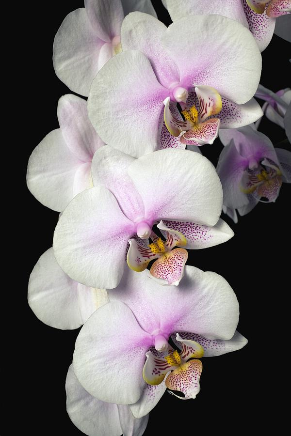 Column Photograph - Orchids by David Chapman