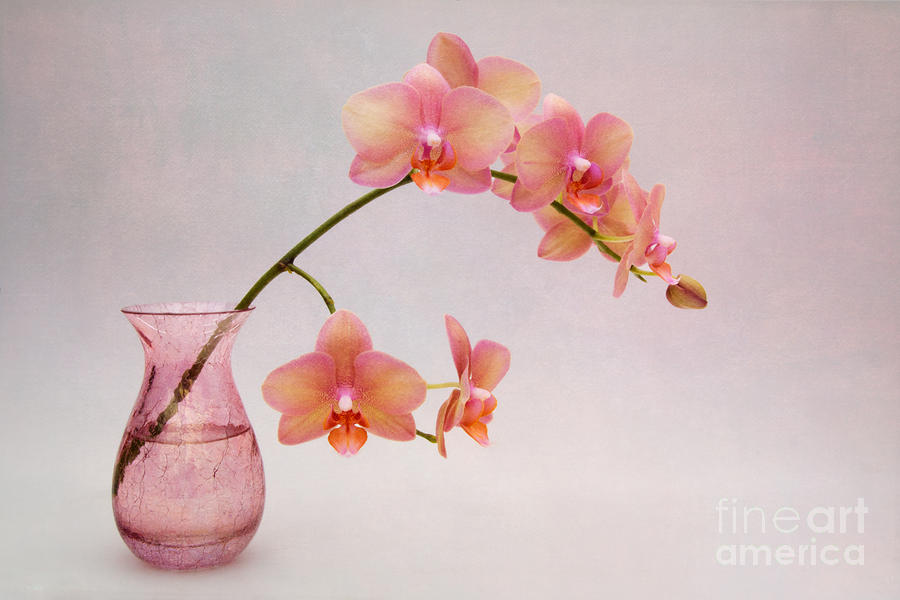 Orchids In A Pink Vase Photograph By Ann Garrett