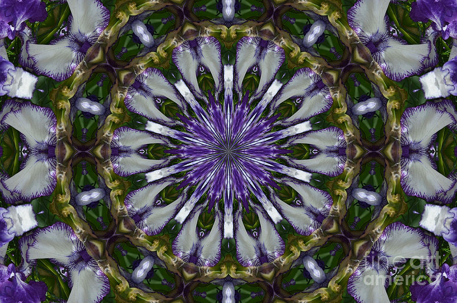 Abstract Photograph - Orchids by Paulina Roybal