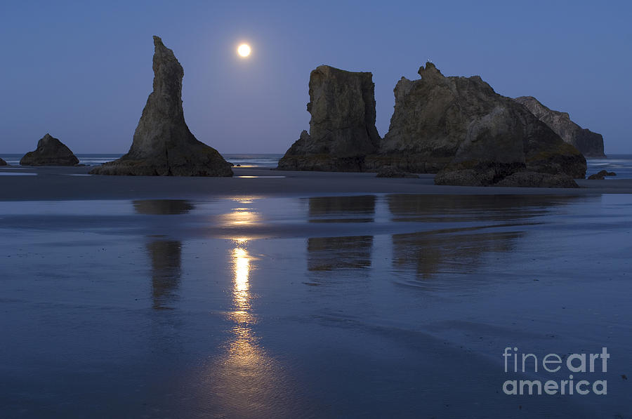 Landscape Photograph - Oregon Coast by John Shaw and Photo Researchers