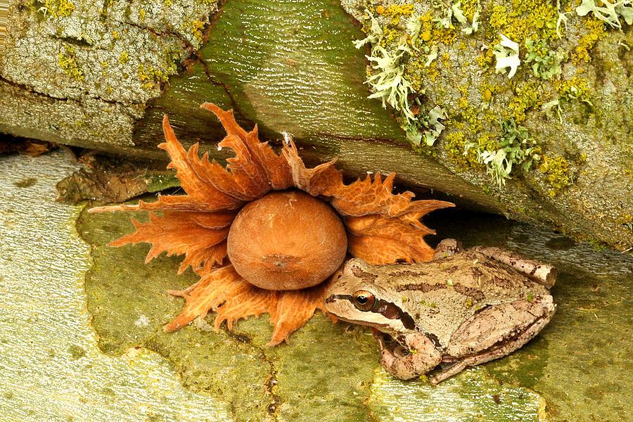 Amphibians Photograph - Oregon Combo by Jean Noren