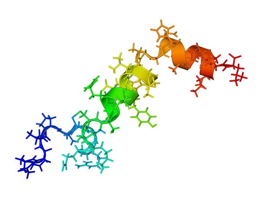 Orexin-a Photograph - Orexin-a Hormone Molecule by Laguna Design