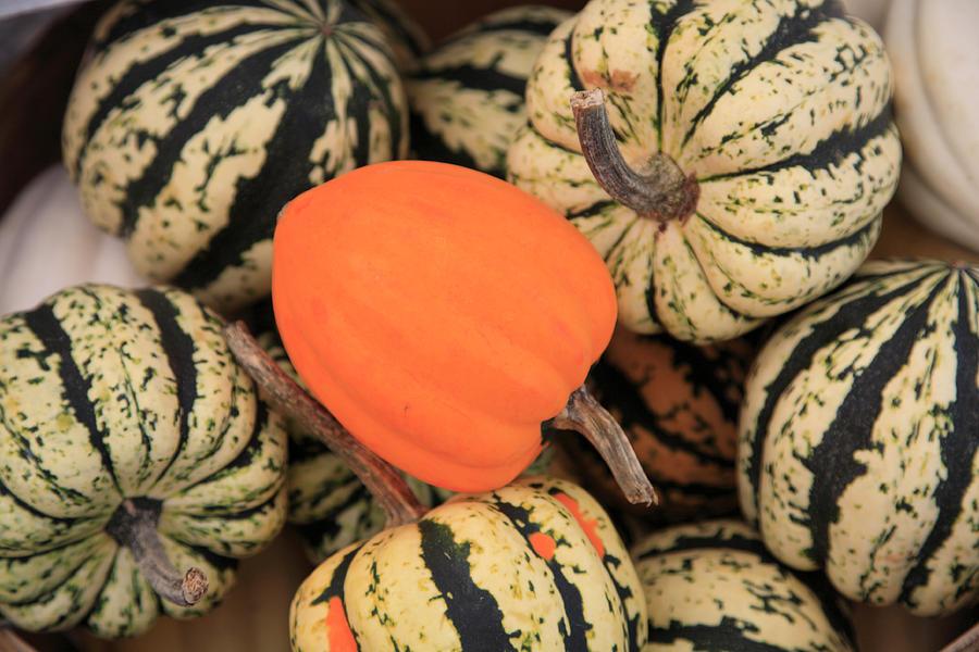 Horizontal Photograph - Organic Pumpkins by Wendy Connett