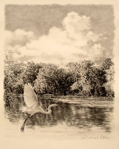 Marsh Scenes Drawing - Original Congaree River Flight by Michael Story