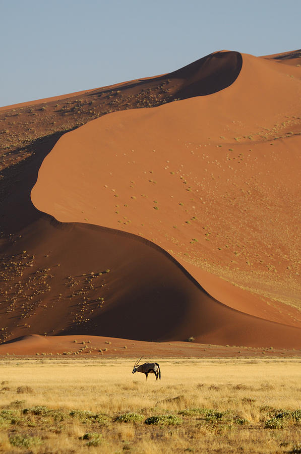 Sand Dunes Photograph - Oryx II by Christian Heeb
