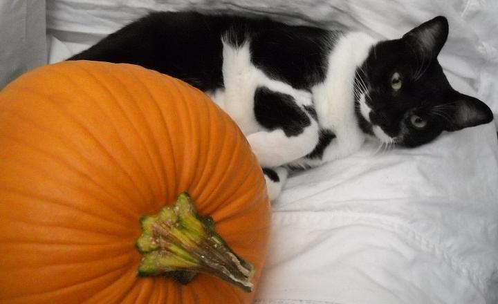 Cat Photograph - Oslo And The Pumpkin by Marian Hebert