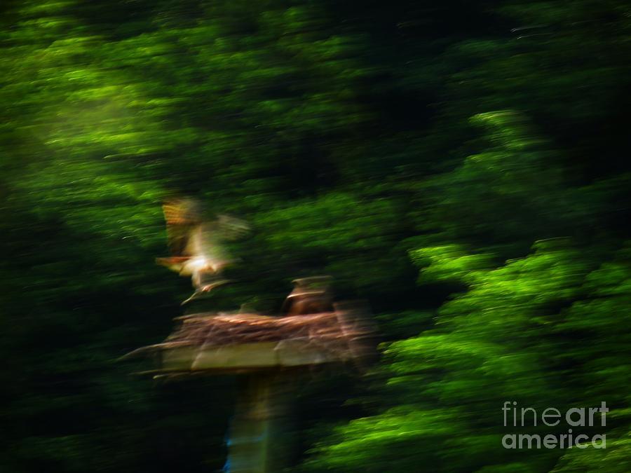 Osprey Photograph - Osprey Motion by Rrrose Pix