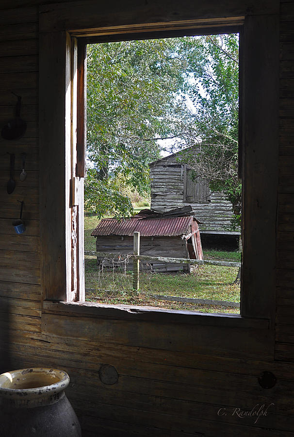 Laura Plantation Photograph - Out Back by Cheri Randolph