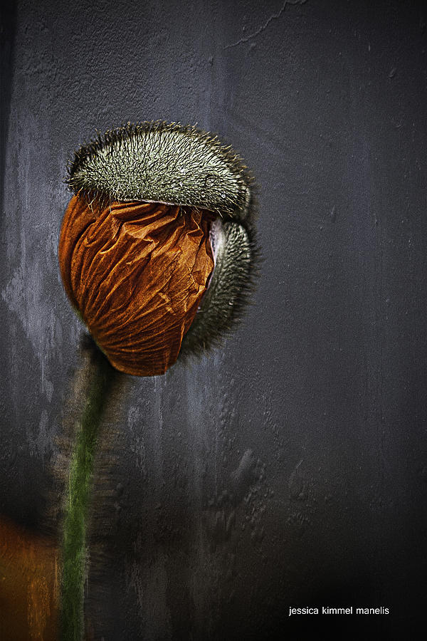 Poppies Photograph - Out Of Darkness Grows Flowers by Jessica Manelis