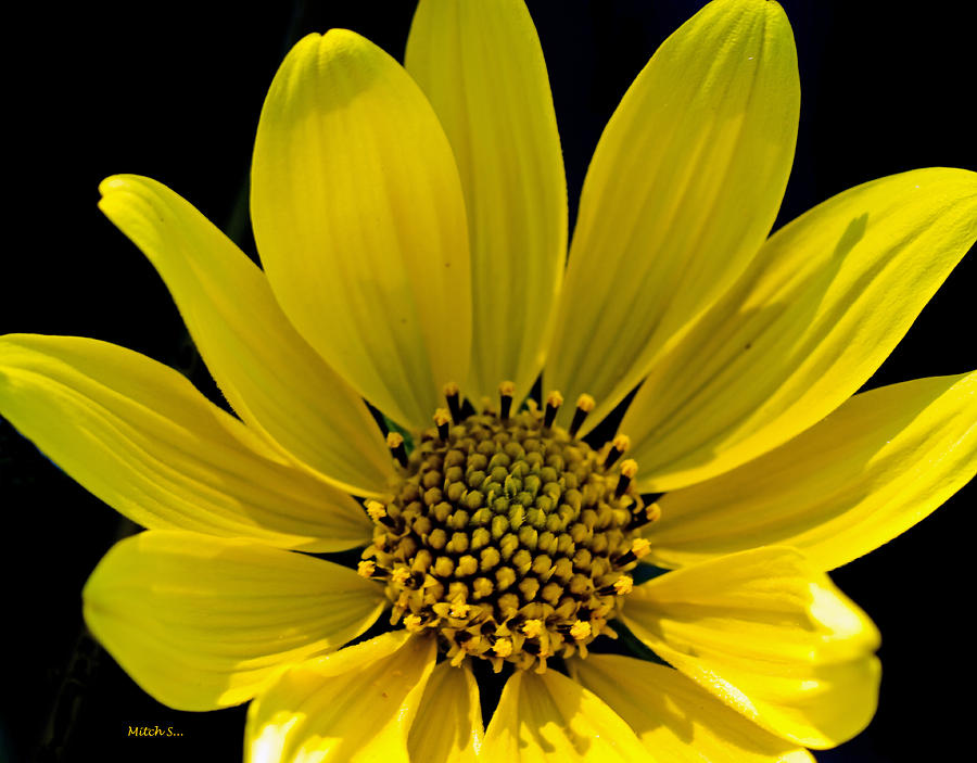 Flower Photograph - Out Of Frame by Mitch Shindelbower