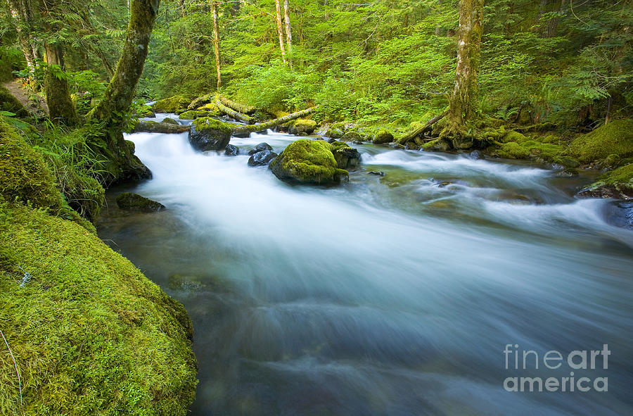 Skate Creek Photograph - Out Of The Rainforest by Mike  Dawson
