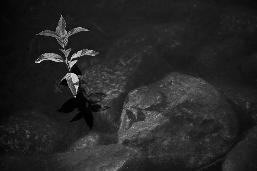 Pond Photograph - Out Of The Water Comes Shadows Bw by Karol Livote