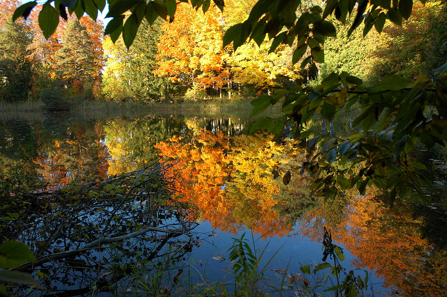 Usa Photograph - Out Of The Woods by LeeAnn McLaneGoetz McLaneGoetzStudioLLCcom