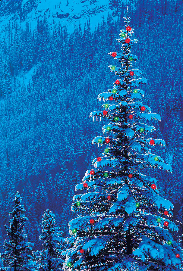 Outdoor christmas tree photograph by darwin wiggett for Outdoor christmas