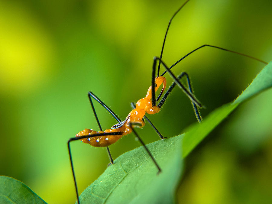Insect Photograph - Over And Under by Stacy Michelle Smith