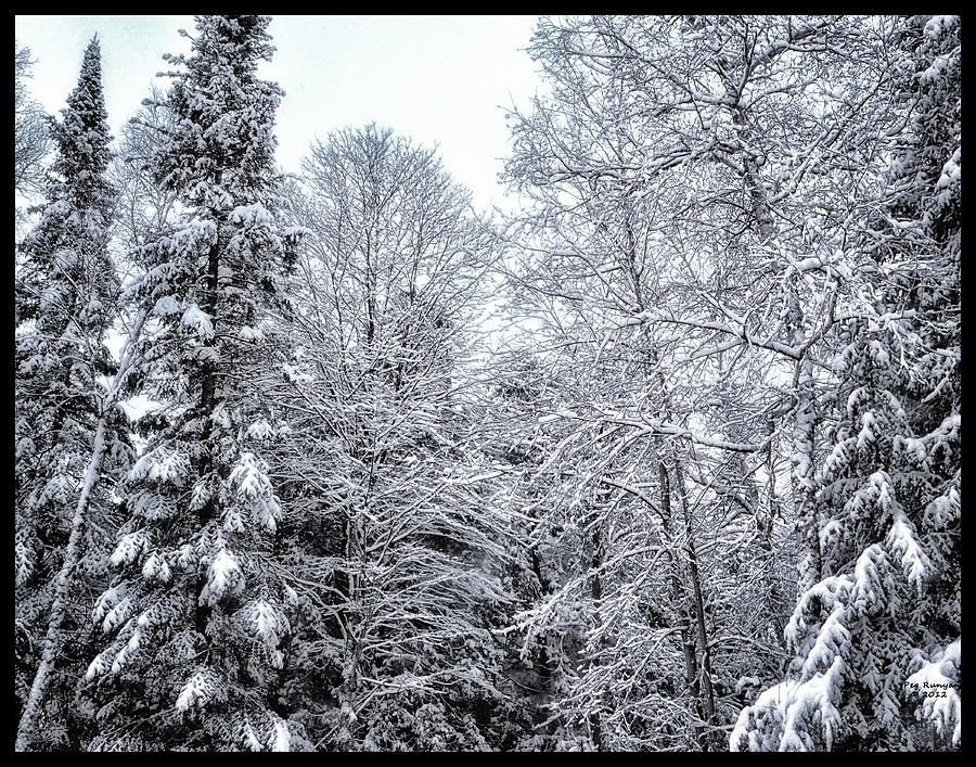 Snowy Woods Photograph - Over Coat Of Snow by Peg Runyan
