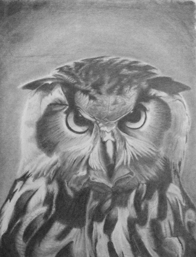 Pencil Drawing - Owl by Chris Finster