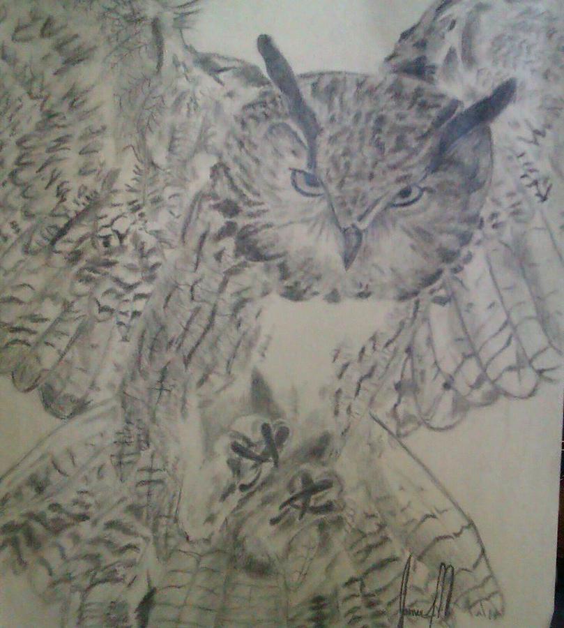 owl Drawing by Jamie Mah