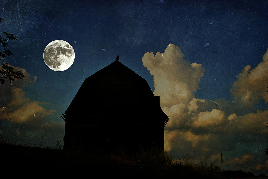 Moon Photograph - Owl Moon by Emily Stauring