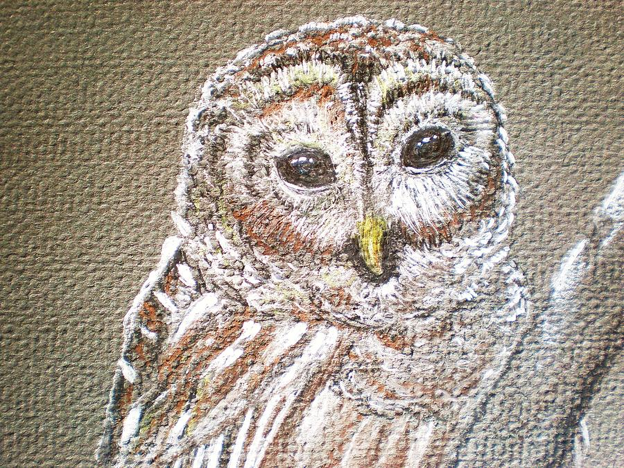 Barn Owl Drawing - owl by Patricia Piffath