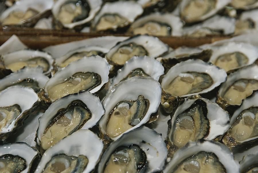 Oysters On The Half-shell Glisten Photograph by Nicole Duplaix