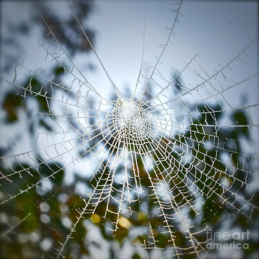 Spider Web Photograph - Pablos Web by Gwyn Newcombe