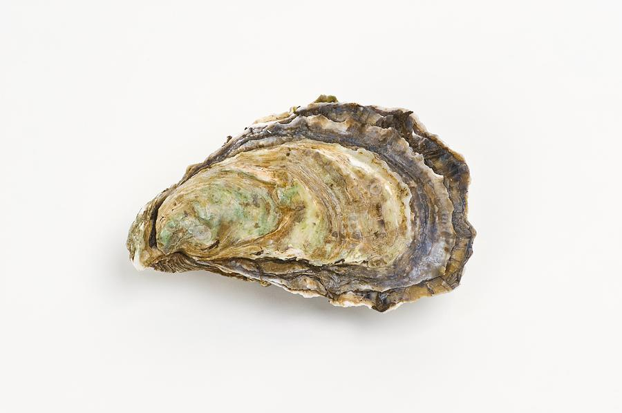 Pacific Oyster Photograph - Pacific Oyster by David Nunuk