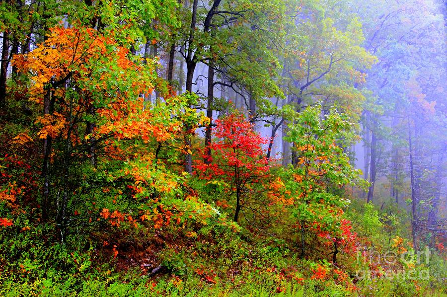 Fall Photograph - Painted Autumn by Carolyn Wright