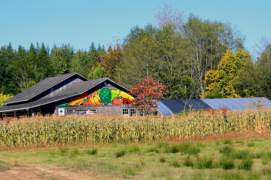 Raw Photograph - Painted Barn by Chris Anderson