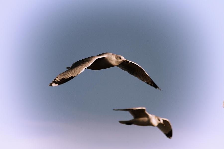 Seagulls Photograph - Pair Of Gulls by Karol Livote