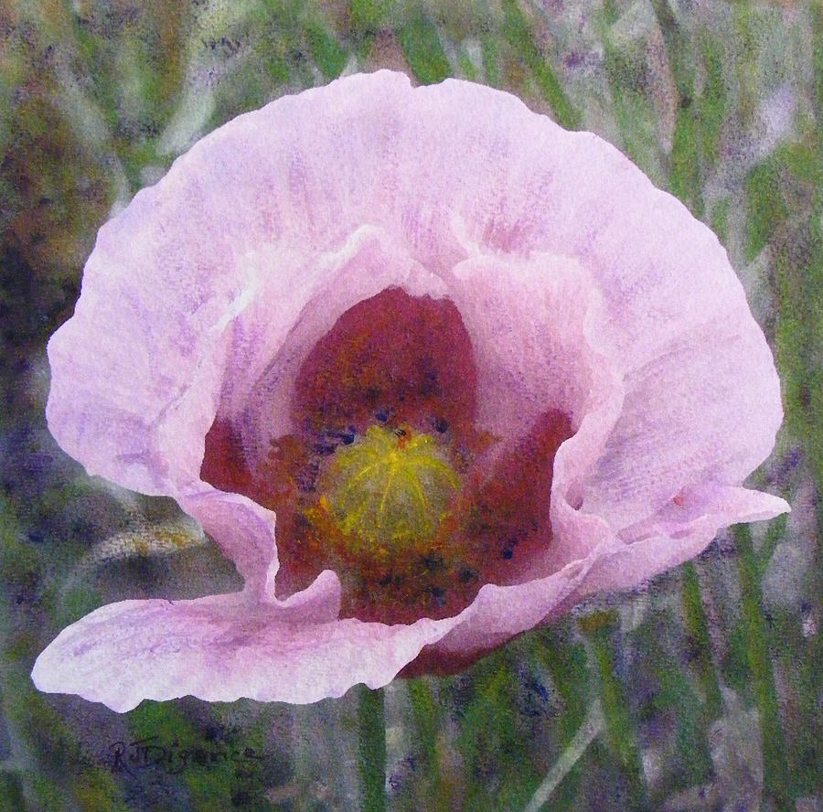 Pale Pink  Poppy Painting