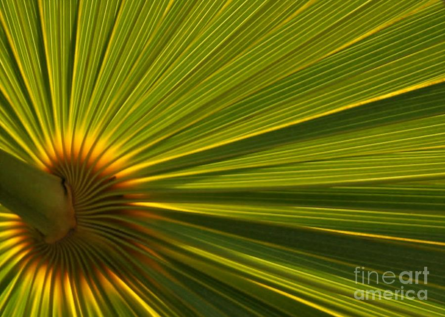 Backlit Photograph - Palm Fron by Sabrina L Ryan