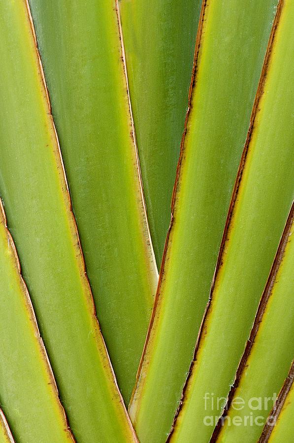 Bronstein Photograph - Palm Frond Detail by Sandra Bronstein