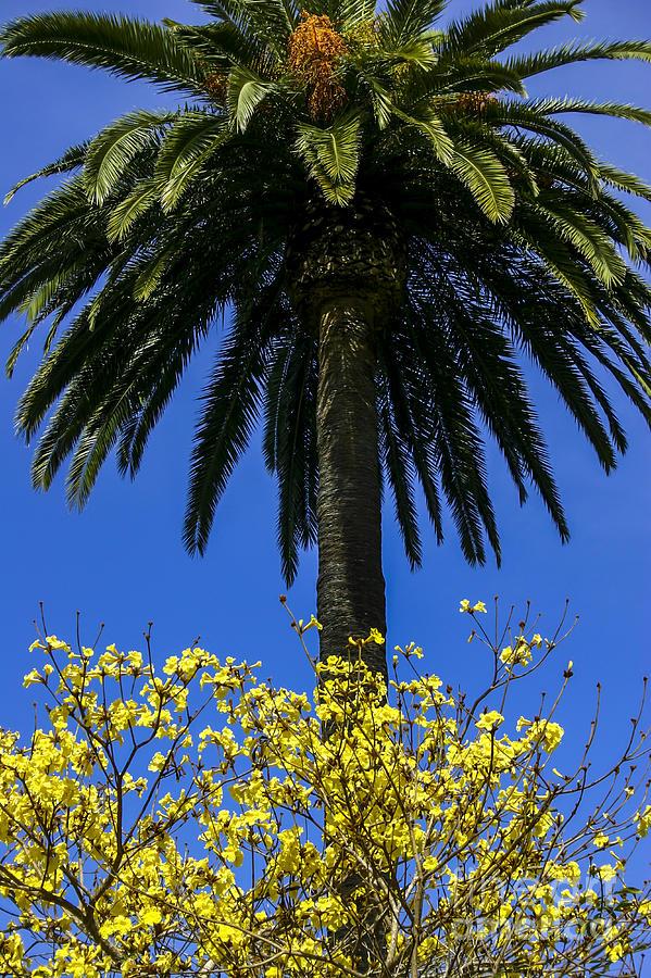 Palm on Yellow by Balanced Art