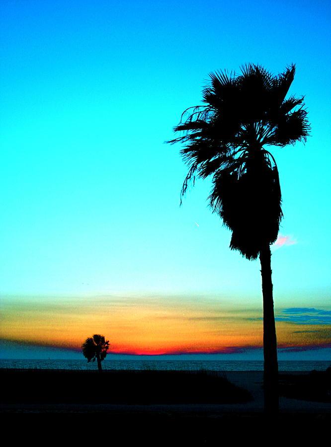 Palm Tree Photograph - Palm Set by Darren Cole Butcher