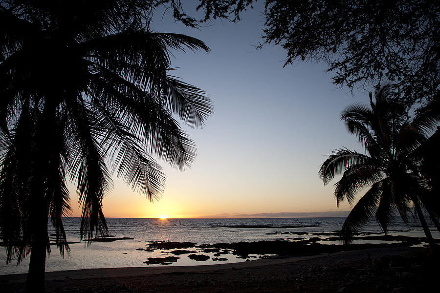 Beach Photograph - Palm Sunset by Peter French