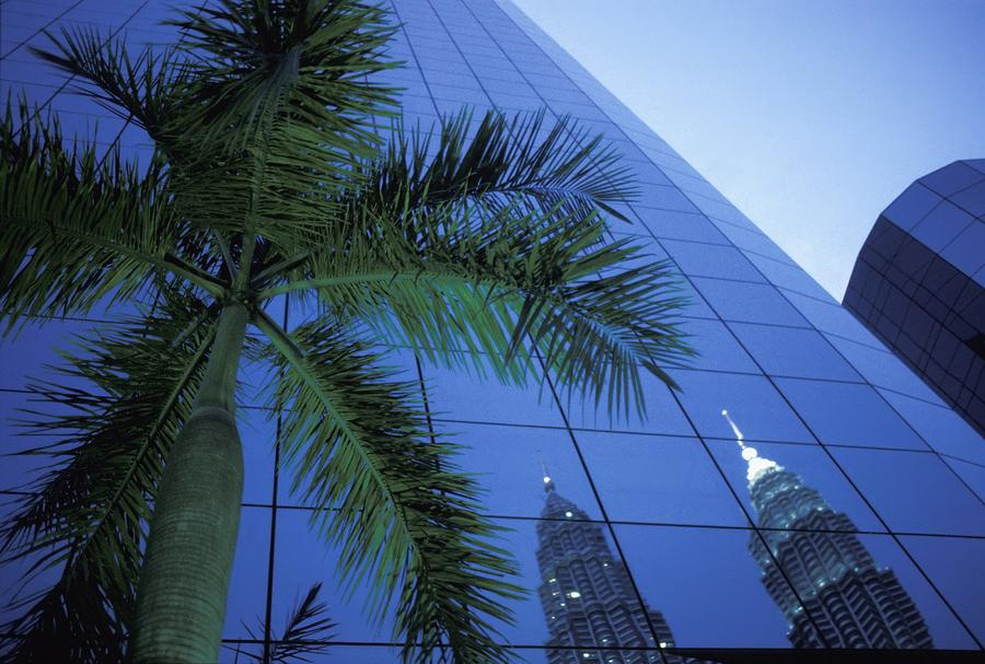 Reflection Photograph - Palm Tree And Reflection Of Petronas by Axiom Photographic