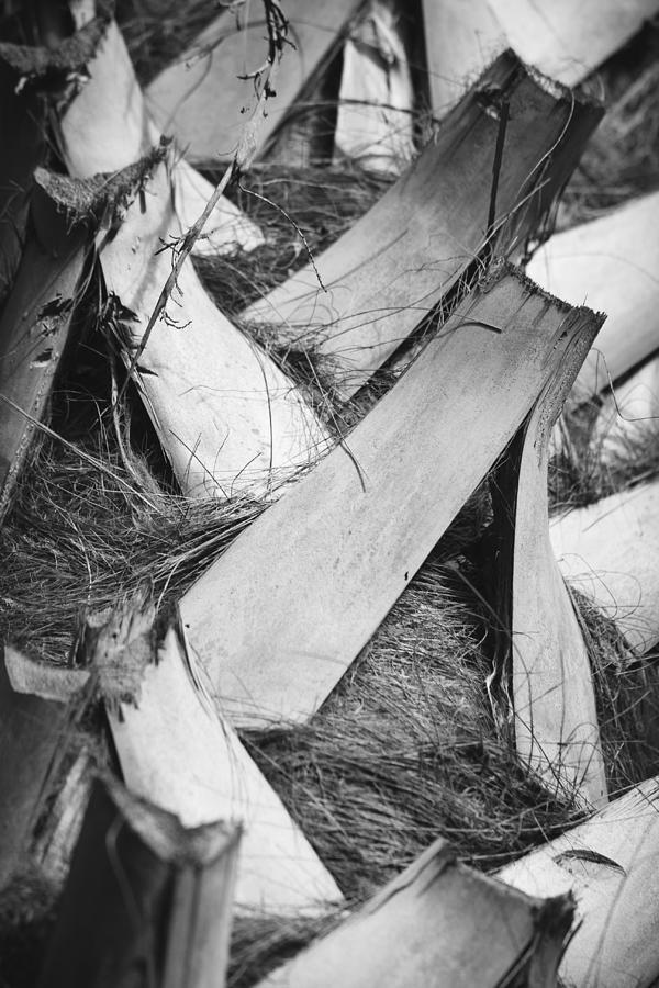 3scape Photos Photograph - Palm Tree Macro by Adam Romanowicz