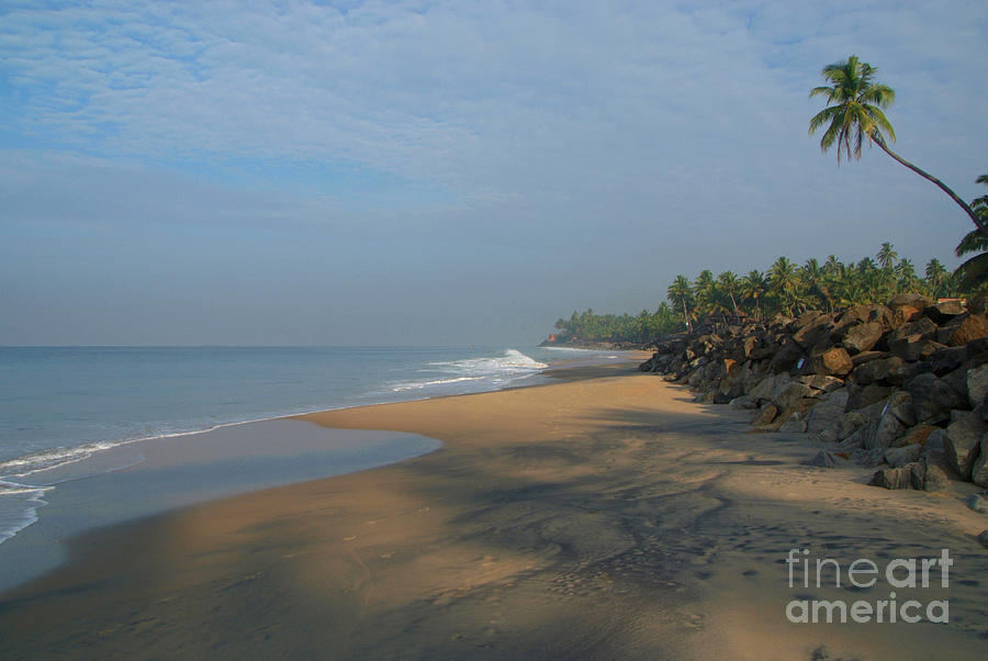 Palm Tree Over Black Beach Varkala Photograph By Serena Bowles