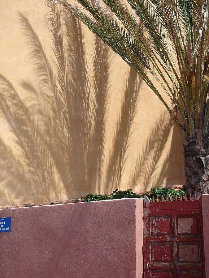Palm Tree Photograph - Palm Tree Shadow by Christopher Mullard