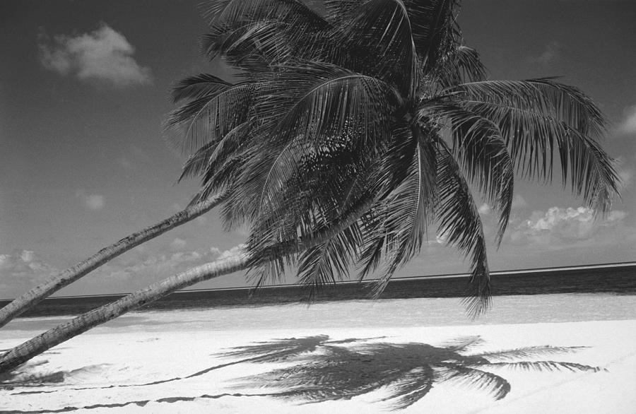 Palm Tree Shadow On Sand Photograph By Anonymous
